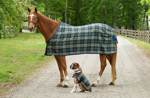 Custom Horse and Dog Blankets