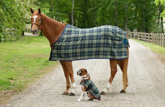 Custom horse blankets from Integrity Linens